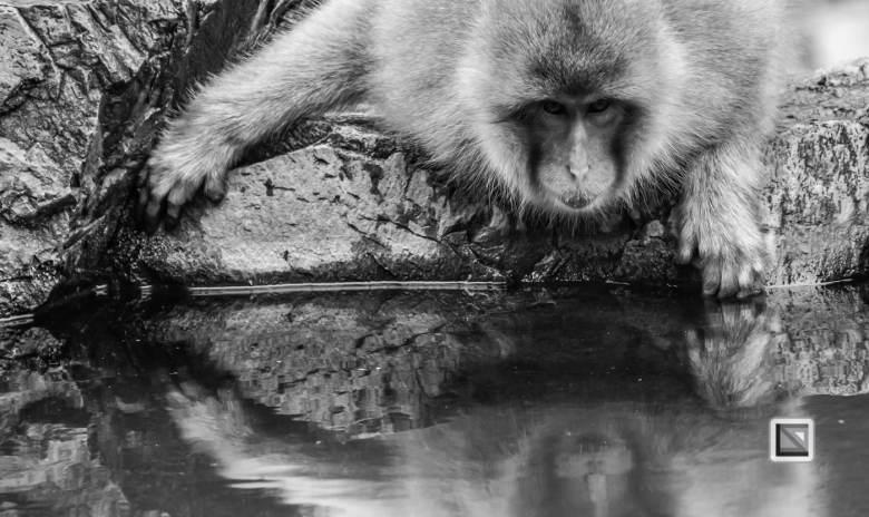 japan-jigokudani-snow_monkeys-118