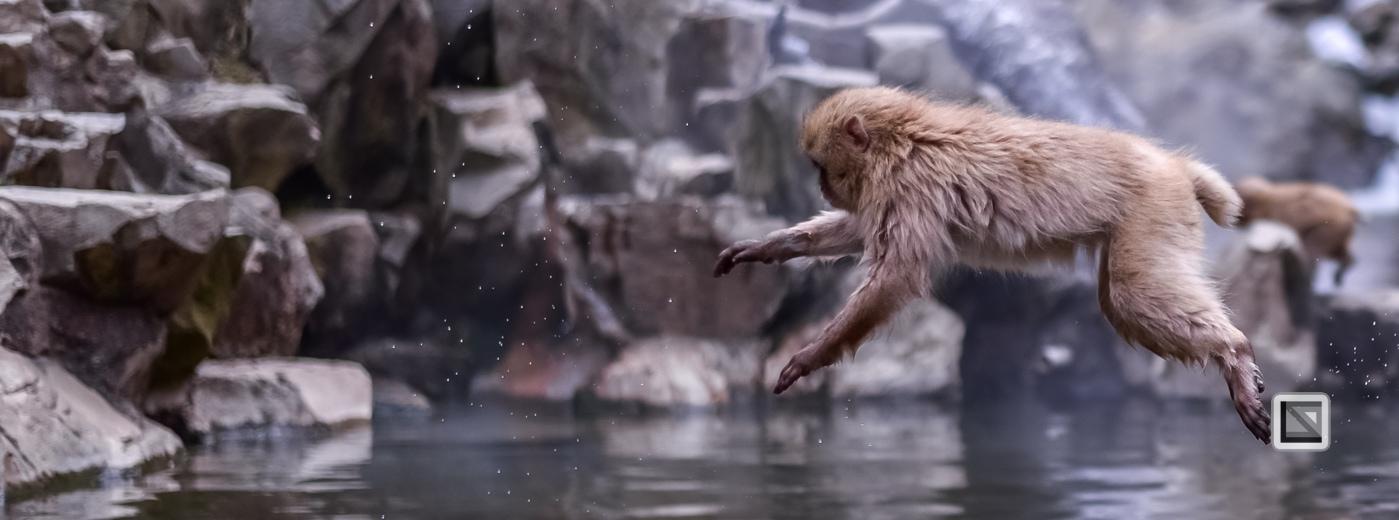 japan-jigokudani-snow_monkeys-93