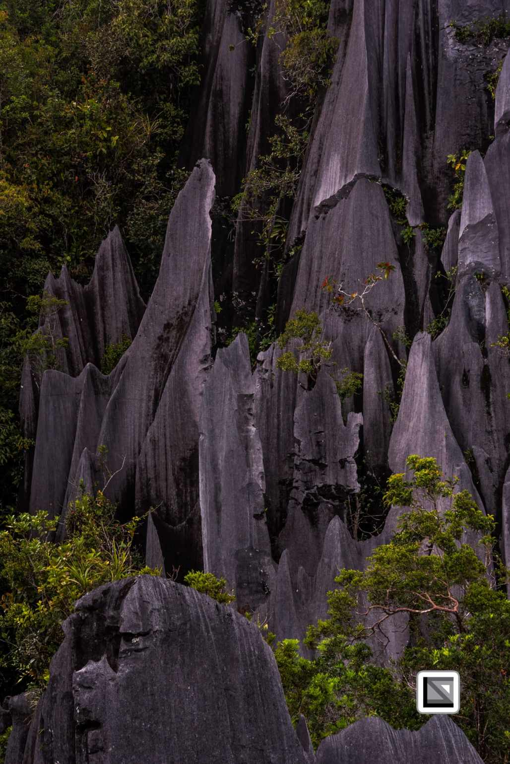 Malaysia-Sarawak-Mulu_Pinnacles-56