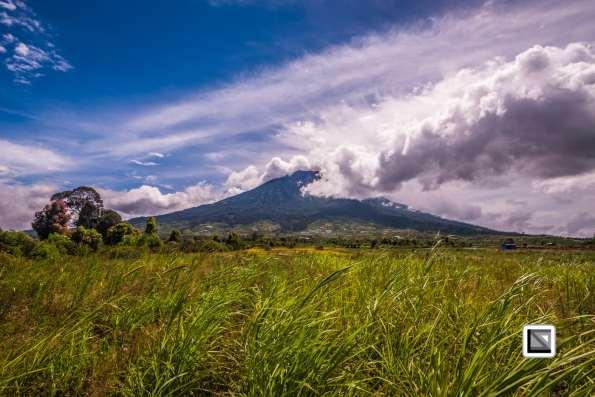 Indonesia-Sumatra-231