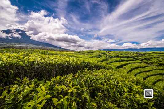 Indonesia-Sumatra-265