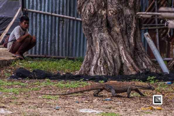 Komodo National Park, Indonesia, home of the infamous Komodo Dragon