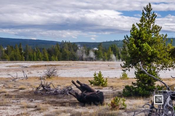 USA - Wyoming - Yellowstone National Park-64