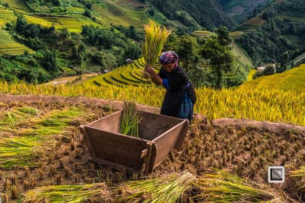 vietnam-mu_cang_chai-yen_bai_province-144
