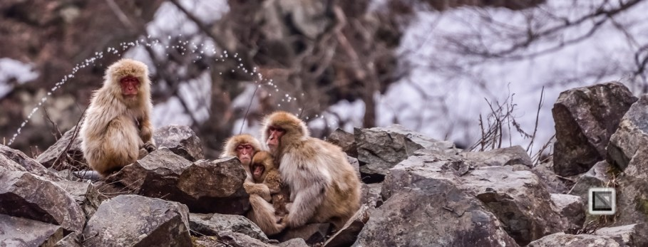 japan-jigokudani-snow_monkeys-155