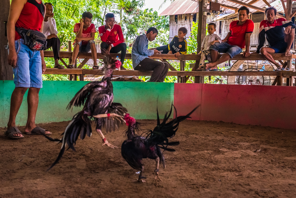 lao-4000-islands-don-dhet-chicken-fight-18