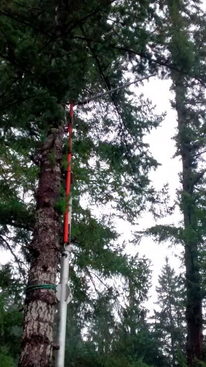 Yagi antenna lashed to fir tree.