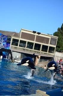 Salto das Orcas