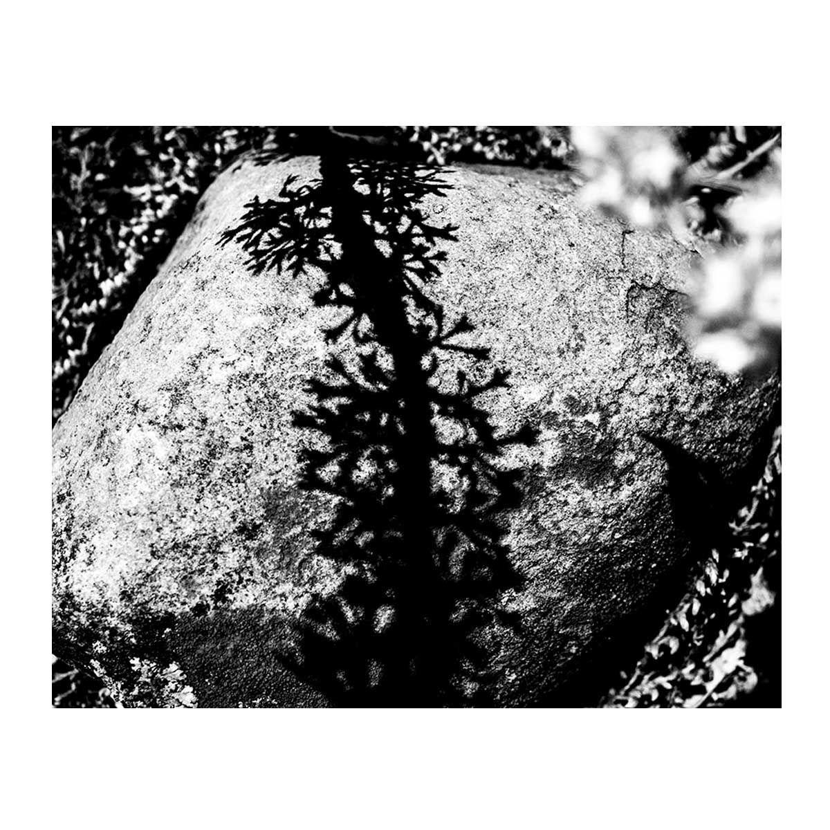 06_Francisco_Vigo