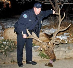 Former Boulder Police Officer Sam Carter with his illegally killed trophy.