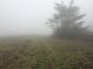 Appalachian Trail Unaka Mountain