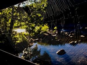 appalachian trail spider web housatonic