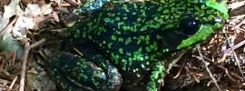 appalachian trail frog new hampshire