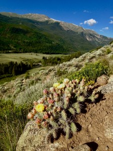 colorado trail cactus clear creek