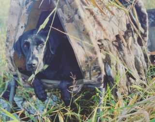 A beautiful morning to put Hydro back to work 🦆 🐕 #claygullyoutfitters #florida #duckhunting #waterfowlhunting #waterfowl #blacklab #blacklabsofinstagram #duckdog #huntflorida #huntingseason #gooutside #photography #outdoorphotography