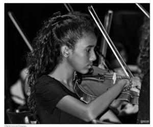 vince violon