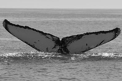 CS305. Photo credit: Jim Darling, 2009.