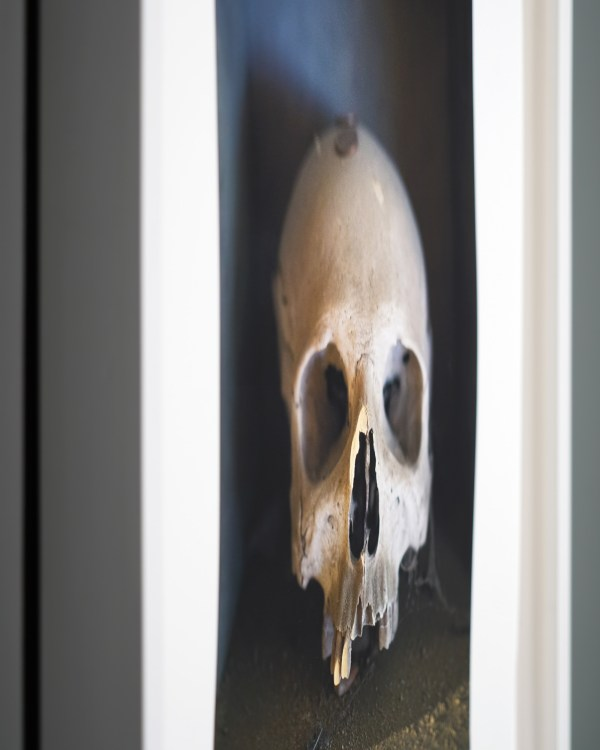 Detail view of a photograph by Clayton Porter from an obtuse angle with a shallow depth of field.