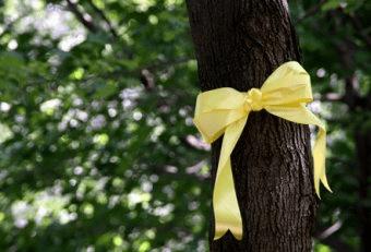 yellow ribbon tree