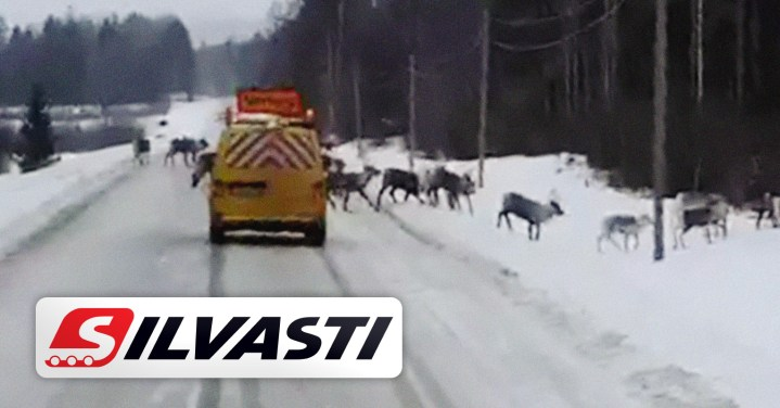 Silvasti Team Knows the Challenges of the North