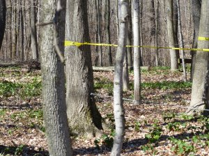 To prevent damage to the low-ropes course while tree service work was underway, caution tape marked off some of the elements