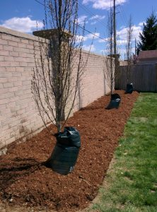 The benefits of natural mulch in your landscaping are numerous