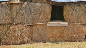 Straw bales are great for bedding animals, biomass fuels, crafts AND mulch