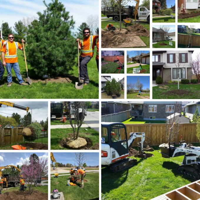 tree planting season