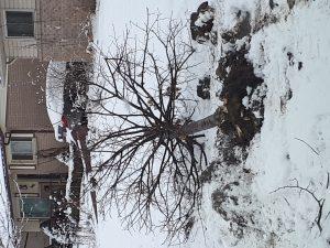 tree hit by car