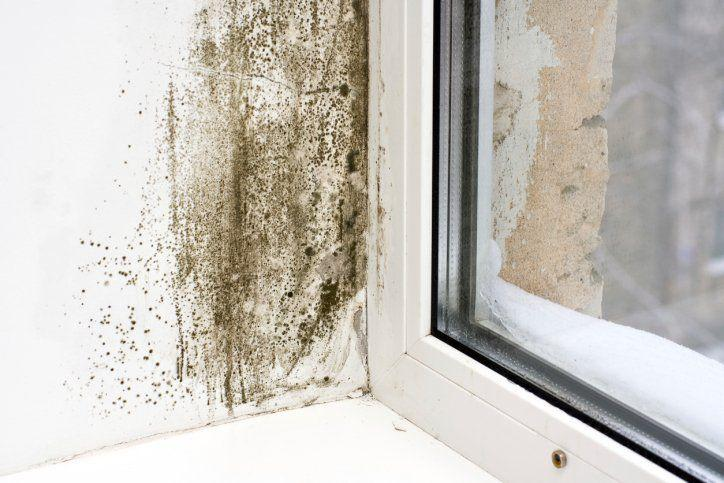 Mold in your crawl space