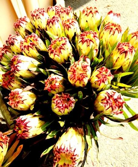 Belgium Farmers Market Flowers 2
