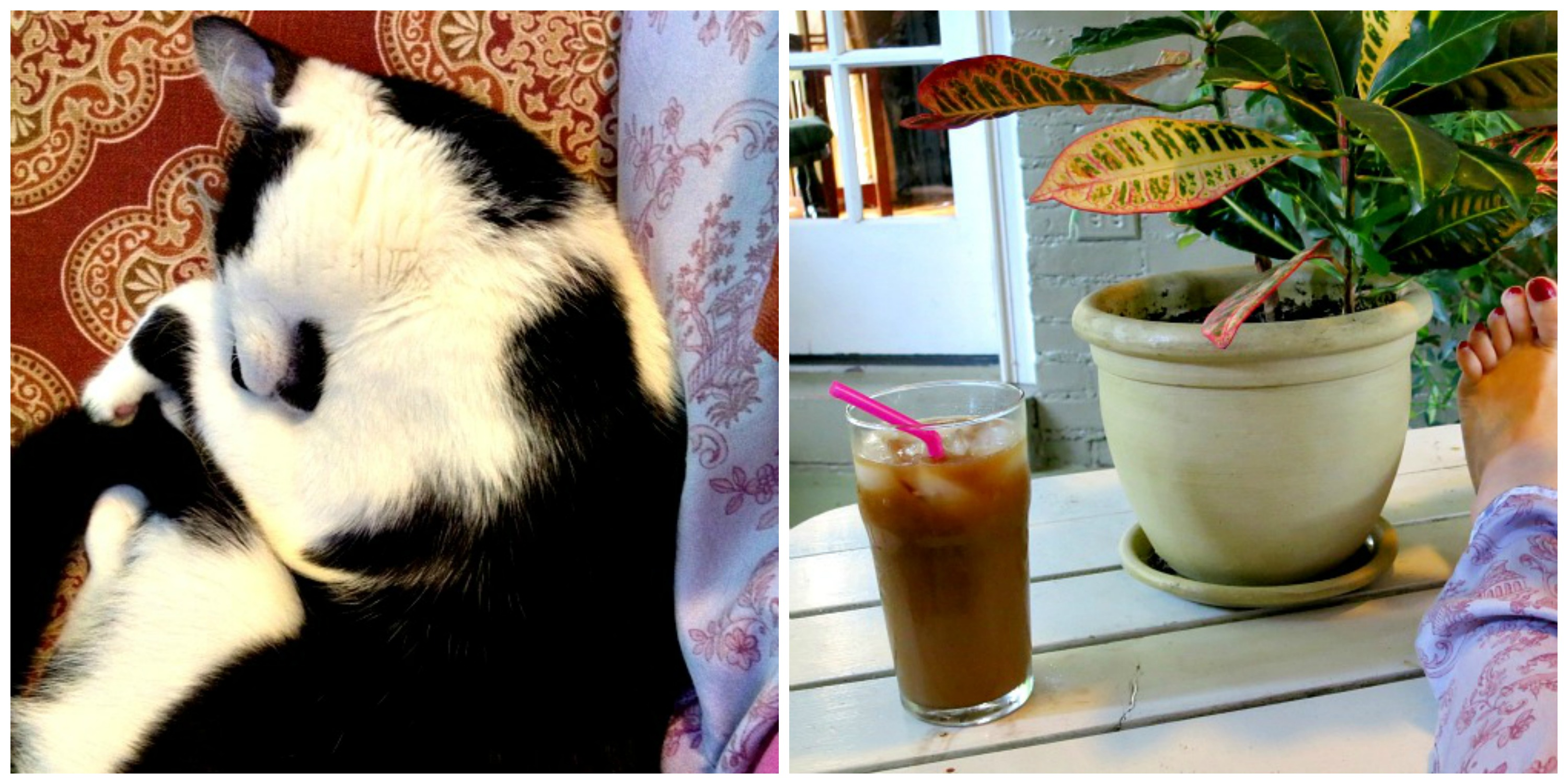 Ice Coffee and Oscar Collage