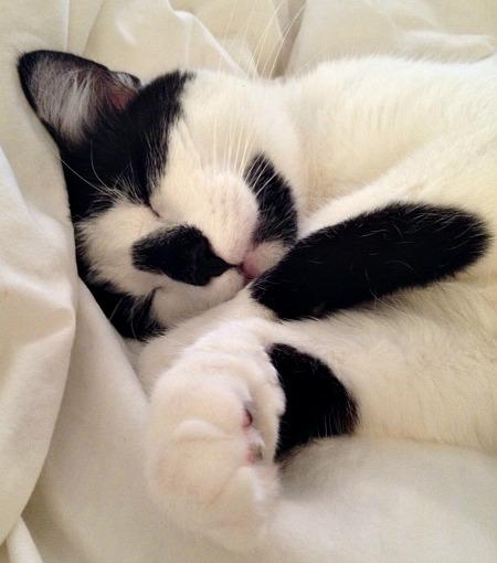 Oscar Sleeping 5