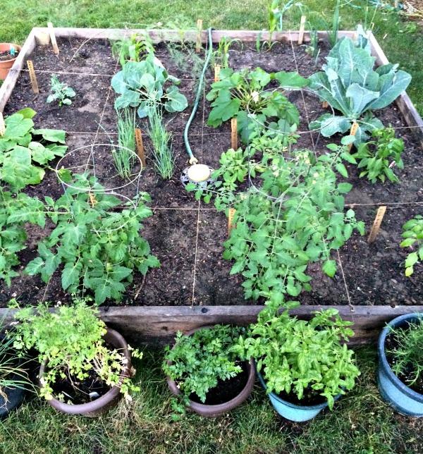 2014 Garden Progress Photo C