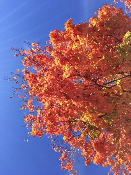 Pretty Tree Up Close