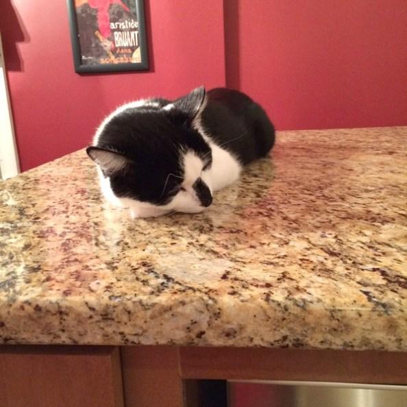 Oscar Napping on Counter