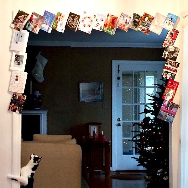 Oscar and the Holiday Cards