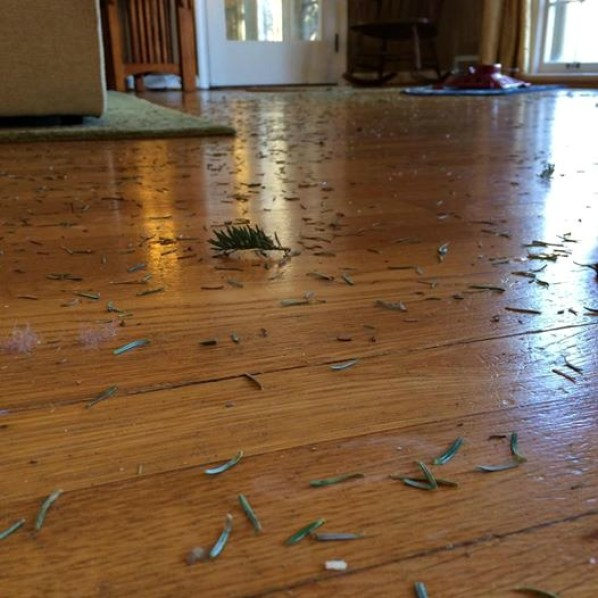 Pine Needles Tree Massacre