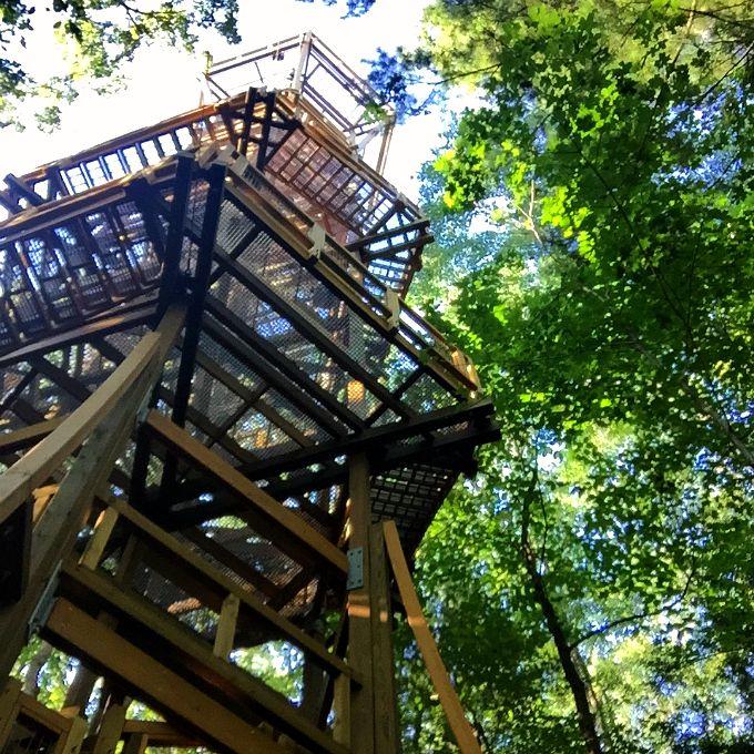 Holden Arboritum Emergent Tower