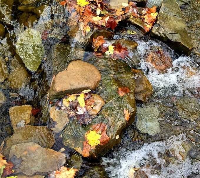 Stream while Hiking Water