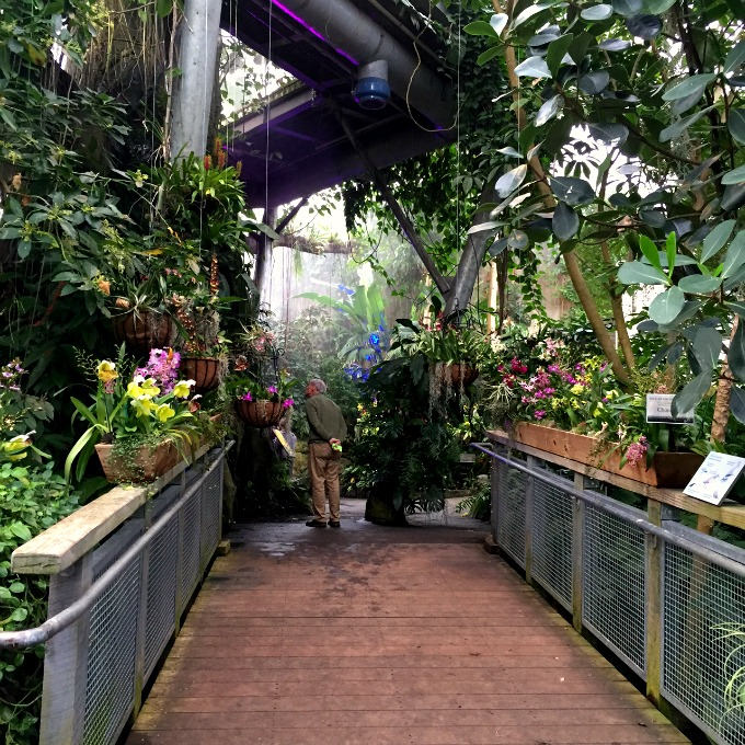 Botanical Gardens Orchid Mania 2016