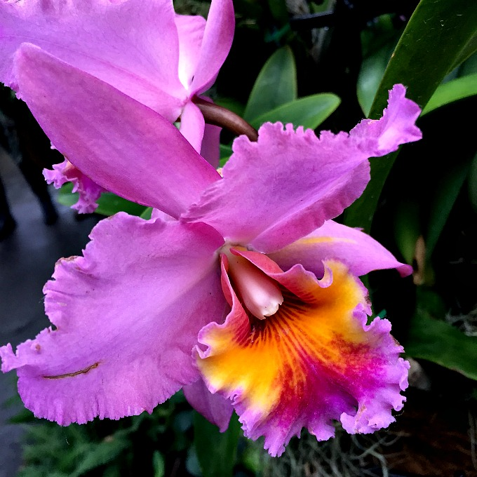 Orchid Mania 2016