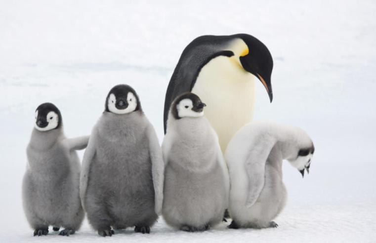 Amazing Pictures Of Wild Animals And Their Babies
