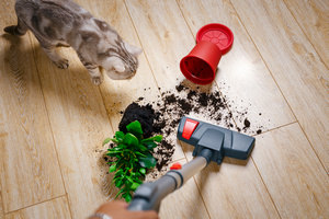 Best Vacuum For Laminate Floors want to know about best vaccume cleaner for hardwood floor then visit our site at clean laminate flooringvacuum Best Vacuum For Laminate Floors