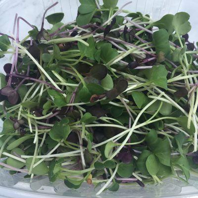 Clean Genes Farm Radish Shoots