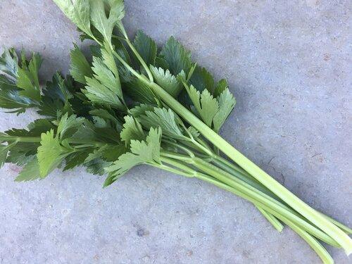 Celery_tango