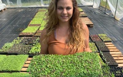 (Video) Microgreen varieties