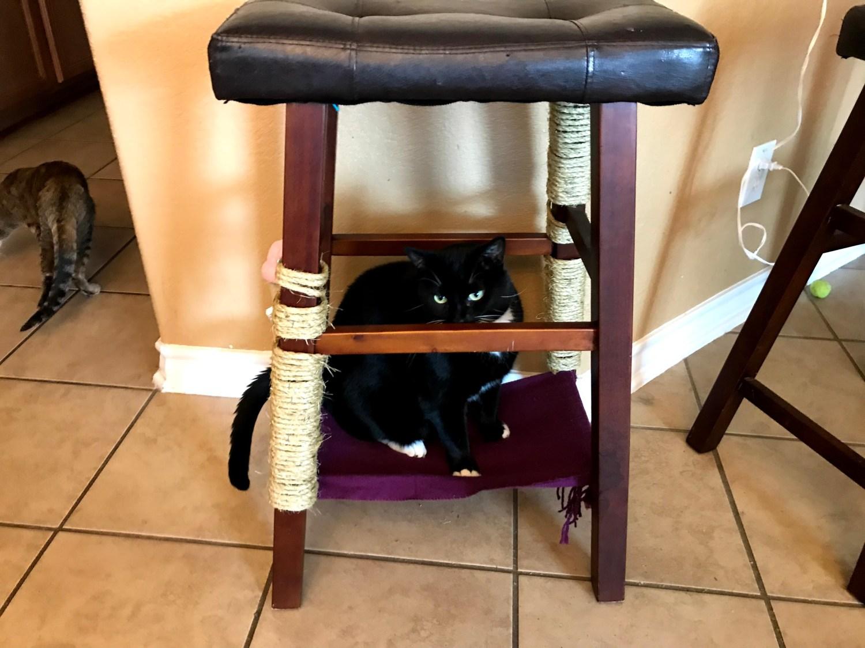 lulu sitting 2