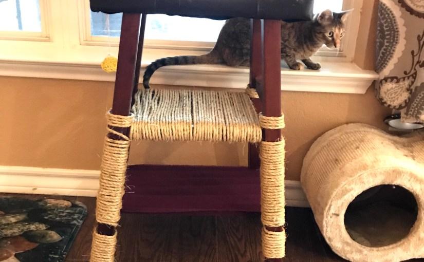 How to create cat furniture DIY