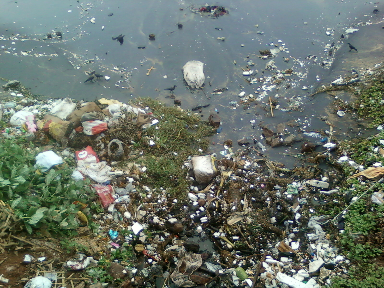 Johor Wants Better Laws On Water Pollution